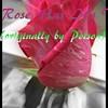 """Every Rose Has it's Thorn"" (originally by Poison) by Crazy lil' Sal<br /> <a href=""https://youtu.be/B5T2gIEh4NY"">https://youtu.be/B5T2gIEh4NY</a><br /> <br /> <a href=""https://creativemusicartsy.wordpress.com/2017/01/19/music-karaoke-every-rose-has-its-thorn-originally-by-poison-by-crazy-lil-sal/"">https://creativemusicartsy.wordpress.com/2017/01/19/music-karaoke-every-rose-has-its-thorn-originally-by-poison-by-crazy-lil-sal/</a><br /> <br /> <br /> <a href=""https://salphotobiz.smugmug.com/Flowers/Various-Flowers/i-sqLnnhT"">https://salphotobiz.smugmug.com/Flowers/Various-Flowers/i-sqLnnhT</a>"