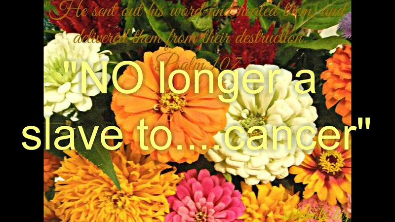 """NO longer a slave to ....cancer""<br /> <a href=""https://youtu.be/I8h7p8Bua-4"">https://youtu.be/I8h7p8Bua-4</a><br /> <br /> <a href=""https://creativemusicartsy.wordpress.com/2016/08/03/music-parody-no-longer-a-slave-to-cancer/"">https://creativemusicartsy.wordpress.com/2016/08/03/music-parody-no-longer-a-slave-to-cancer/</a><br /> <br /> <a href=""http://salphotobiz.smugmug.com/Flowers/State-Fair-Horticulture/20812402_NtGn88#!i=3753067919&k=n9hqrVw&lb=1&s=A"">http://salphotobiz.smugmug.com/Flowers/State-Fair-Horticulture/20812402_NtGn88#!i=3753067919&k=n9hqrVw&lb=1&s=A</a>"