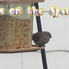 """Eyes on the Sparrow"" (Karaoke version) by Crazy li' Sal<br /> <a href=""https://youtu.be/W_uMpC8R_u8"">https://youtu.be/W_uMpC8R_u8</a><br /> <br /> <a href=""https://creativemusicartsy.wordpress.com/2017/02/12/music-karaoke-eyes-on-the-sparrow-karaoke-version-by-crazy-li-sal/"">https://creativemusicartsy.wordpress.com/2017/02/12/music-karaoke-eyes-on-the-sparrow-karaoke-version-by-crazy-li-sal/</a><br /> <br /> <a href=""https://salphotobiz.smugmug.com/Animals/Wildlife-around/i-QXRWTfT"">https://salphotobiz.smugmug.com/Animals/Wildlife-around/i-QXRWTfT</a>"