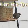 """Eyes on the Sparrow"" (Karaoke version) by Crazy li' Sal<br /> <a href=""https://youtu.be/W_uMpC8R_u8"">https://youtu.be/W_uMpC8R_u8</a><br /> <br /> <a href=""https://creativemusicartsy.wordpress.com/2017/02/12/music-karaoke-eyes-on-the-sparrow-karaoke-version-by-crazy-li-sal/"">https://creativemusicartsy.wordpress.com/2017/02/12/music-karaoke-eyes-on-the-sparrow-karaoke-version-by-crazy-li-sal/</a><br /> <br /> <a href=""https://salphotobiz.smugmug.com/Animals/Wildlife-around/i-QXRWTfT"">https://salphotobiz.smugmug.com/Animals/Wildlife-around/i-QXRWTfT</a>"