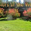 "-""Colors of the Wind"" (originally in Disney movie-Pocahontas) by Crazy<br /> <a href=""https://youtu.be/a2tWZLbspcM"">https://youtu.be/a2tWZLbspcM</a><br /> <br /> <a href=""https://creativemusicartsy.wordpress.com/2018/06/13/music-karaoke-colors-of-the-wind-originally-in-disney-movie-pocahontas-by-crazy-lil-sal/"">https://creativemusicartsy.wordpress.com/2018/06/13/music-karaoke-colors-of-the-wind-originally-in-disney-movie-pocahontas-by-crazy-lil-sal/</a><br /> <br /> #creativemusicartsy #crazylilsal<br /> <a href=""https://www.instagram.com/creativemusicartsy/"">https://www.instagram.com/creativemusicartsy/</a><br /> <br /> <a href=""https://salphotobiz.smugmug.com/Flowers/WCROC-Hort-Gardens-View/i-MpwJdb2"">https://salphotobiz.smugmug.com/Flowers/WCROC-Hort-Gardens-View/i-MpwJdb2</a><br /> <br /> <a href=""https://salphotobiz.smugmug.com/Weather/Fall-Season-in-Morris/i-5r4f3rb"">https://salphotobiz.smugmug.com/Weather/Fall-Season-in-Morris/i-5r4f3rb</a>"