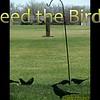 "Karaoke-""Feed the Birds"" (Mary Poppins movie) by Crazy lil' Sal<br /> <a href=""https://youtu.be/Y7YAsp3NtCU"">https://youtu.be/Y7YAsp3NtCU</a><br /> <br /> <a href=""https://creativemusicartsy.wordpress.com/2018/10/14/music-karaoke-feed-the-birds-mary-poppins-movie-by-crazy-lil-sal/"">https://creativemusicartsy.wordpress.com/2018/10/14/music-karaoke-feed-the-birds-mary-poppins-movie-by-crazy-lil-sal/</a><br /> <br /> #creativemusicartsy #crazylilsal<br /> <a href=""https://www.instagram.com/creativemusicartsy/"">https://www.instagram.com/creativemusicartsy/</a><br /> <br /> <a href=""https://salphotobiz.smugmug.com/Animals/Wildlife-around/i-dZ5k9PX?fbclid=IwAR2ijfK6iYJUSEYLiRLJIbYG7Vu7_CwAoCXLTTIimrBwGQkl6IAwcmIYR4Q"">https://salphotobiz.smugmug.com/Animals/Wildlife-around/i-dZ5k9PX?fbclid=IwAR2ijfK6iYJUSEYLiRLJIbYG7Vu7_CwAoCXLTTIimrBwGQkl6IAwcmIYR4Q</a>"