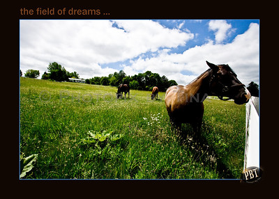 A field of dreams on the escarpment ... June 6, 2010