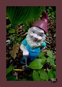 The Garden Gnome ...