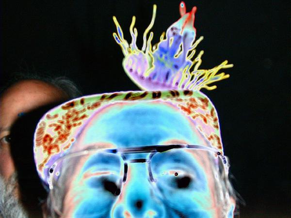 brad-joel-jellyfish68