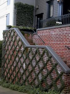 vines-on-bricks245