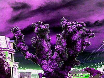 gnarly-purple-tree-sky219