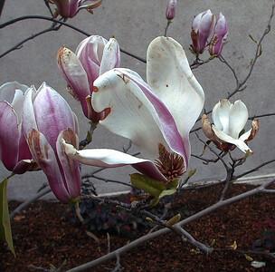 flowers243