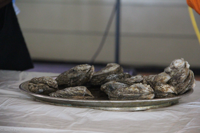 Oysters to be shucked.