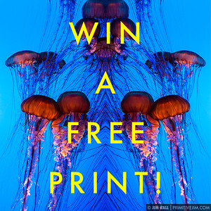 "You can win a free framed print up to 24""x30"" in size read details here -----> http://www.facebook.com/photo.php?fbid=363956427014770&set=a.363956423681437.84135.348829315194148&type=1&theater"