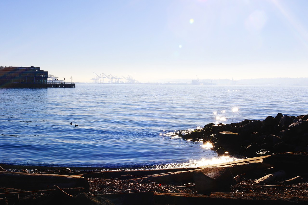 I wish you could have seen the dazzling sun spots, such jewels dancing up and down the bay. The photo is nothing like.