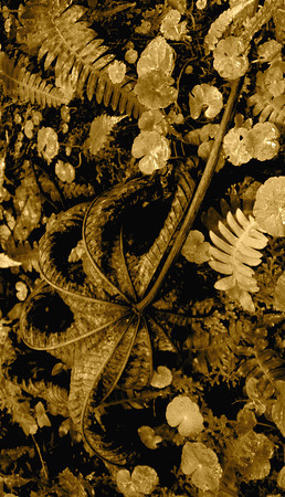 """Brocade""  photography by: Elizabeth Christopher © 2010"