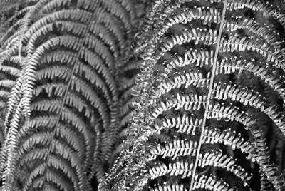 """Ferns"", 1 Kauai, Hawaii  photography by: Elizabeth Christopher © 2007"