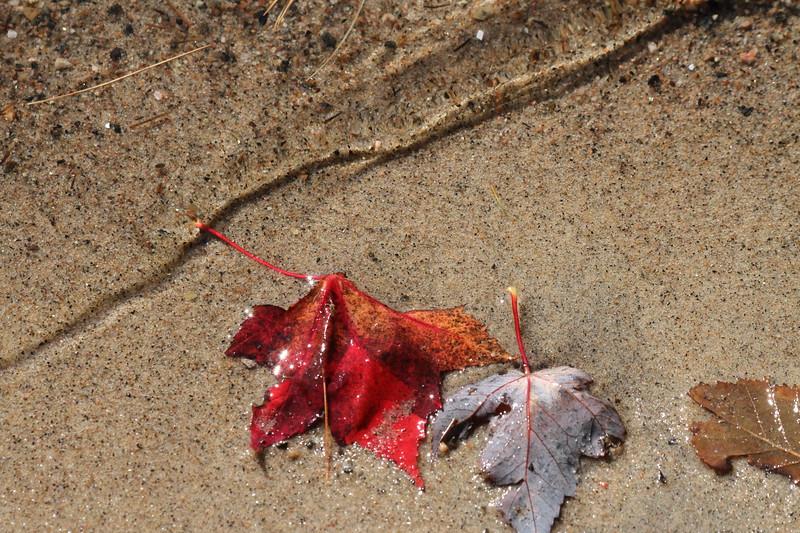 Brackenrig Bay in the Fall