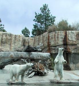 2006   San Diego Zoo  ,  Disney California , Princess  Lunch 008