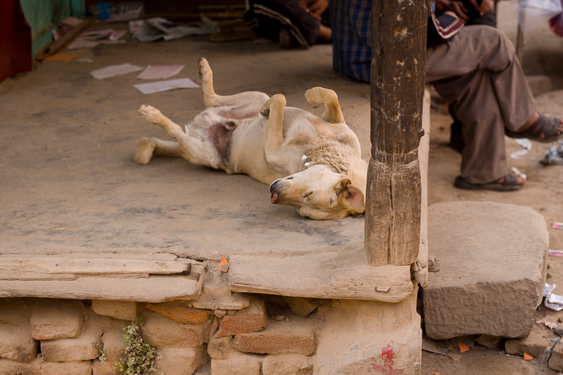 Typical Dog Posture in a Hot Environment