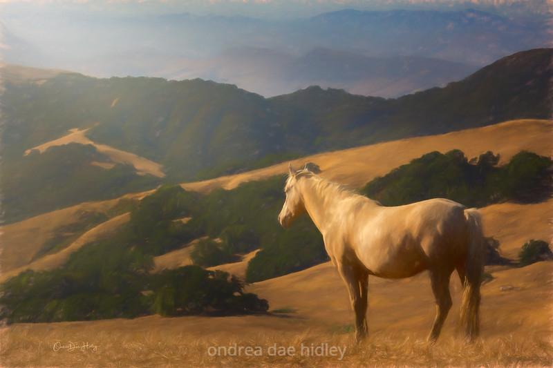 Hillside Meditation