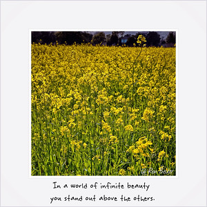 In a world of infinite beauty you stand out above the others.