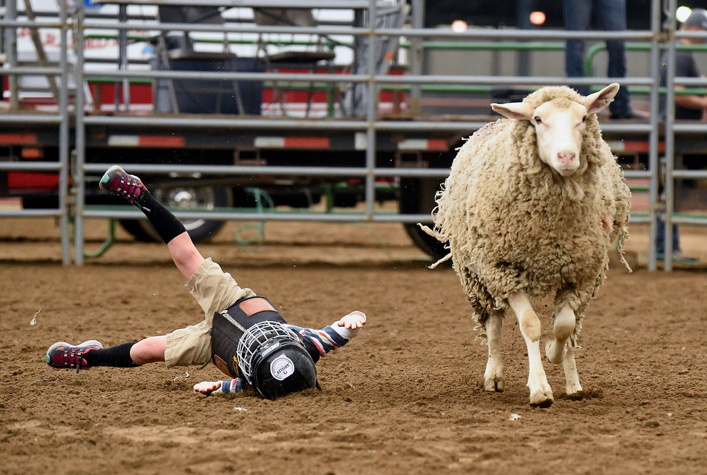 . Jasper Williams is bucked off a sheep during the Mutton Busting event on Thursday at the Boulder County Fairgrounds in Longmont. For more photos of the event go to dailycamera.com Jeremy Papasso/ Staff Photographer/ Aug 3, 2017