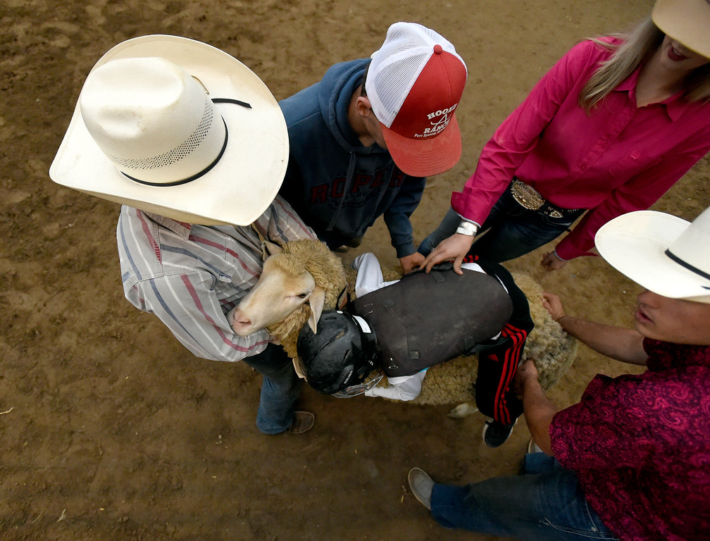 . Volunteers hold a sheep while a child gets his grip before riding during the Mutton Busting event on Thursday at the Boulder County Fairgrounds in Longmont. For more photos of the event go to dailycamera.com Jeremy Papasso/ Staff Photographer/ Aug 3, 2017