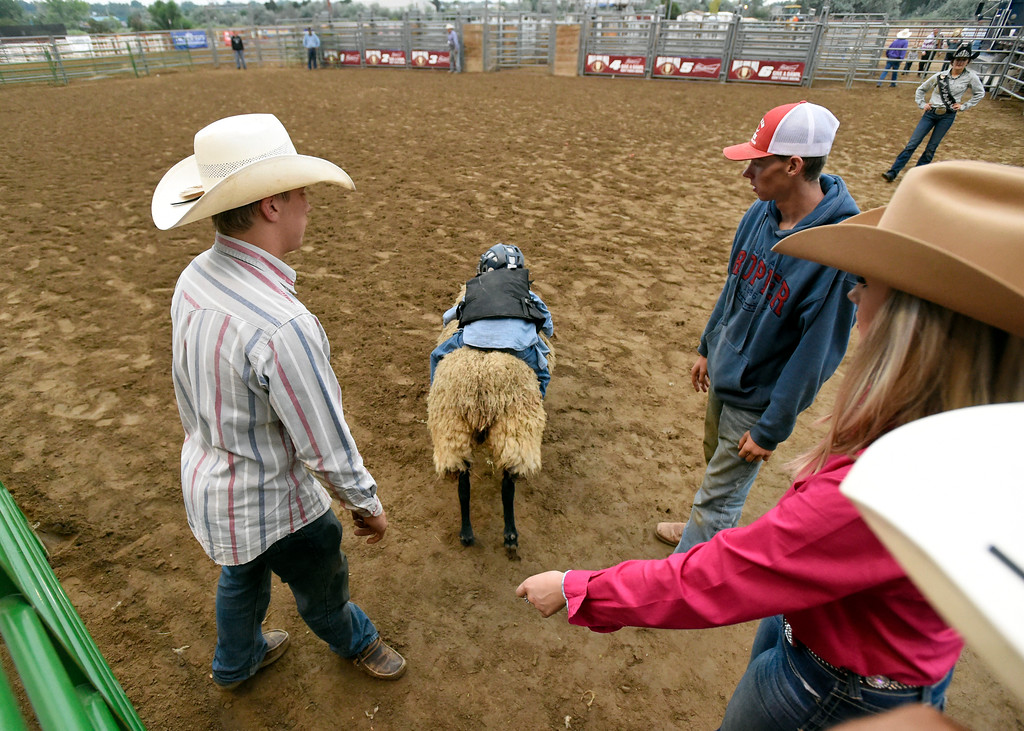 . A child rides a sheep during the Mutton Busting event on Thursday at the Boulder County Fairgrounds in Longmont. For more photos of the event go to dailycamera.com Jeremy Papasso/ Staff Photographer/ Aug 3, 2017