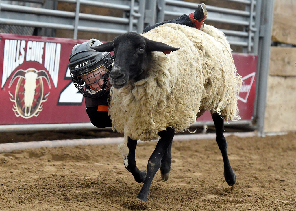 . Daide Gunter hangs on tight during the Mutton Busting event on Thursday at the Boulder County Fairgrounds in Longmont. For more photos of the event go to dailycamera.com Jeremy Papasso/ Staff Photographer/ Aug 3, 2017