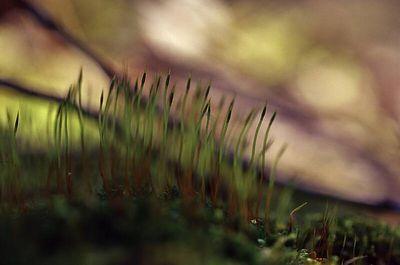 Samblad ja samblikud - Mosses and Lichens