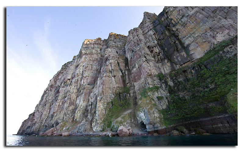 73. Bird cliff at the North-western side of Saunders Island
