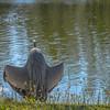 """Batman"" Great Blue Heron"