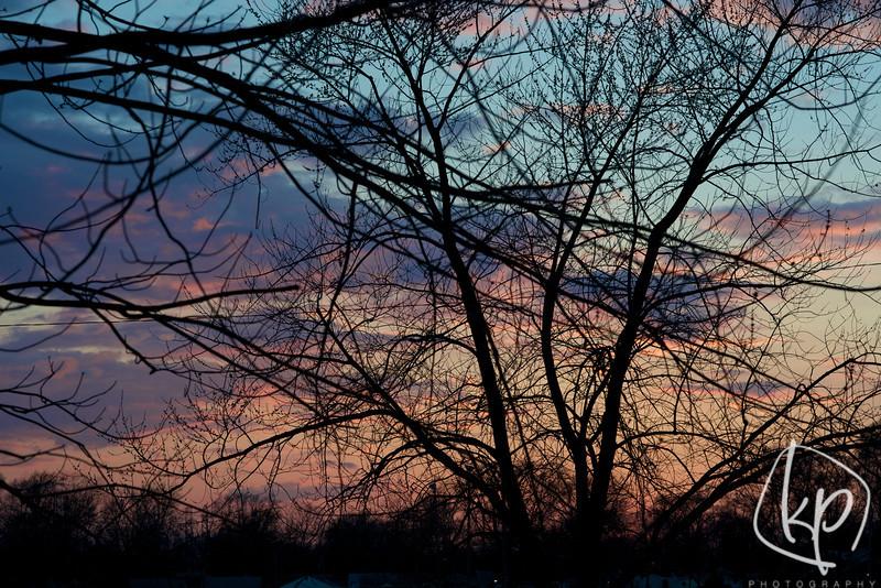 {99/365} Spring Nights