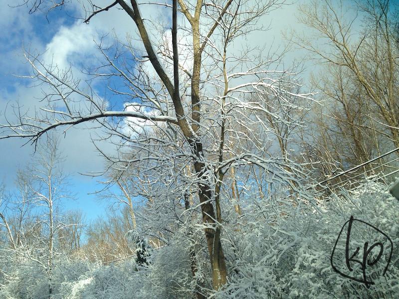 {106/365} Snow...