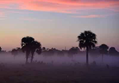 Morning Fog, N.Fort Myers FL