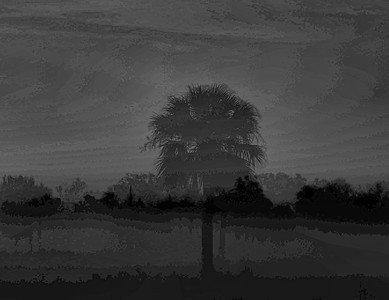 Palm Tree in a Meadow, N. Fort Myers FL