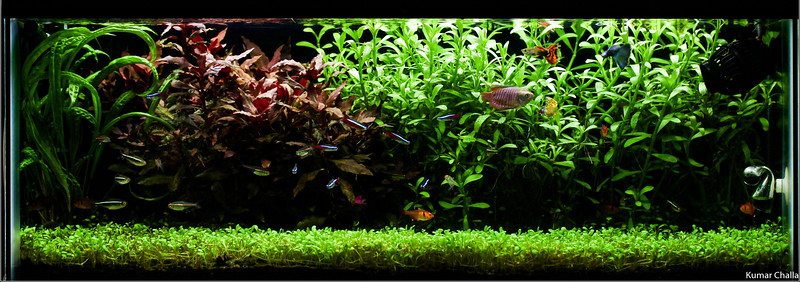 My 20 gallon long tank