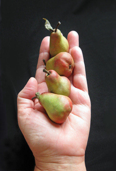 Sculpted pears