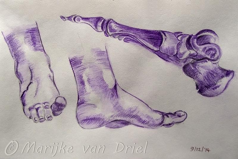 Studie voeten