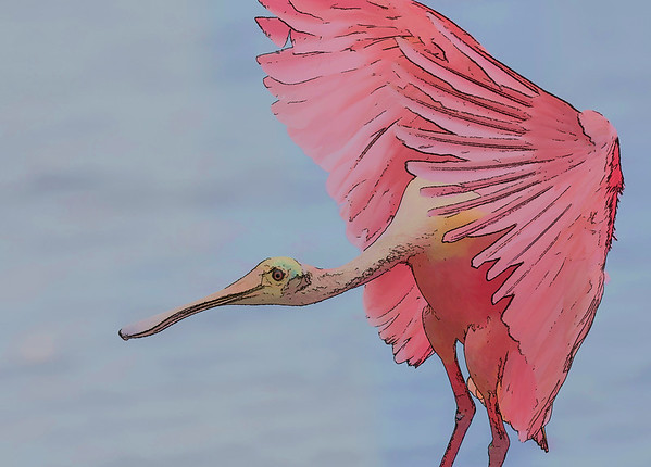 Roseate Spoonbill- Post Processing: Topaz Sim-Cartoon