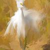 Crazy Snowy Egret
