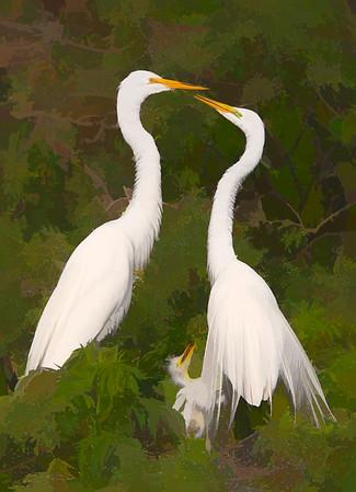 Great Egret Family on Nest