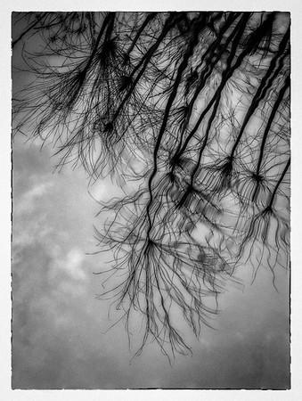Sky and Reeds On Pond