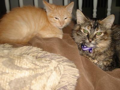DewDrop (Dewey) and Natsu