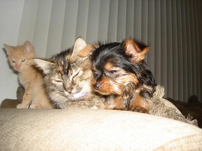 Kimo and Kitties