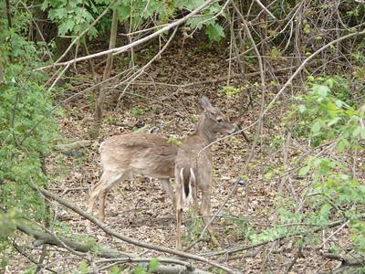 Backyard Bambi's 2012