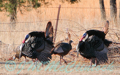 Strutting their stuff.