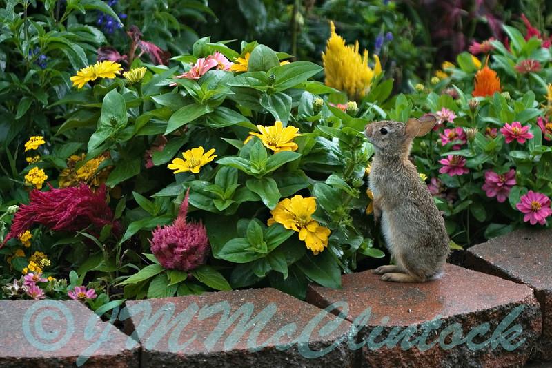 Rainy day bunny.