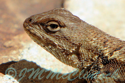 Lizard Portrait