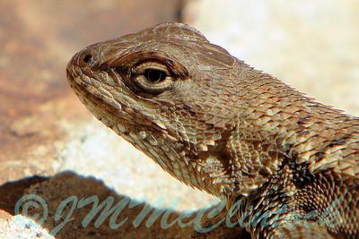 Lizard Portrait