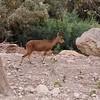 En Gedi, Nature Preserve, Dead Sea, Israel 3