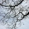 Beauty of Bare Trees