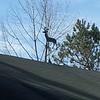 At Pleasant Valley Wildlife Sanctuary in Lenox, MA